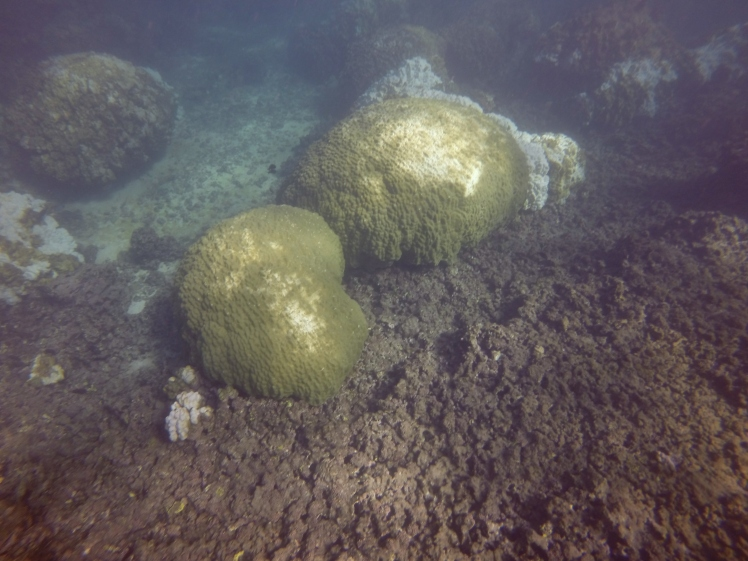 mound coral recovery 12.20.15