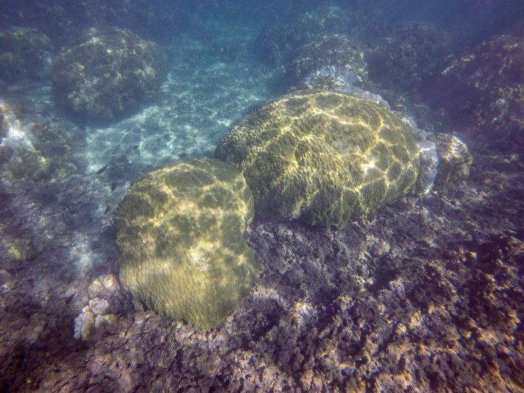 mound coral recovery 12.30.15