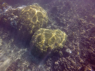 mound coral recovery-2 12.30.15