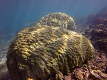 mound coral recovery-3 12.30.15