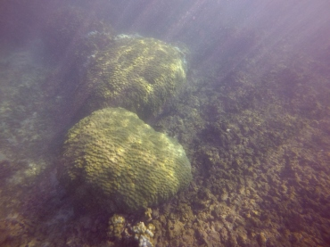 mound coral recovery 3 1.08.16