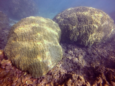 mound coral recovery 2 1.08.16