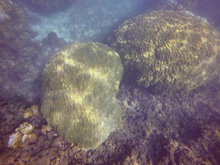 mound coral recovery 1.08.16