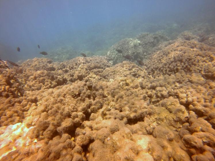 4.15.2016 dead coral