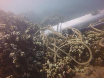 hulakai mast on live coral colonies