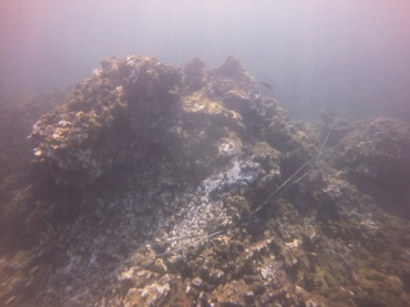heavy coral damage where boat grounded
