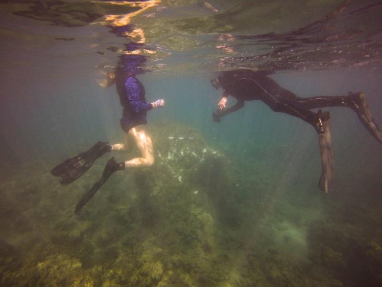 DAR divers recording coral damages