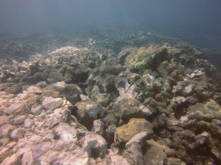 Broken mound coral