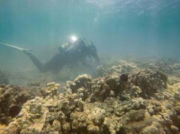 DAR L Krammer replanting coral