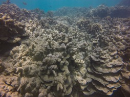 coral recovery 2