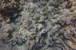 coral recovery 3